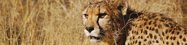 art-safari
