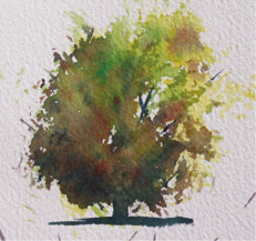 Fig. 6. As far as painting trees is concerned the straight edge has enormous versatility. By using wet in wet method with the bright there is a bit more colour differentiation than with the a round brush and then the marks on the bits of dry paper show the linking branches freshly and without labour.