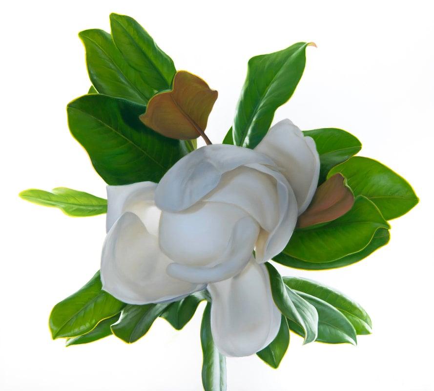 magnificent-magnolia-small_orig